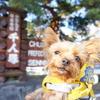道の駅 花の里いいじまとお散歩に最高な千人塚公園☆