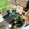 混沌バケツとカオスの植木鉢
