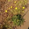 11月21日 路傍の花