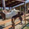 Pony言語について:Reference Capabilities編