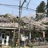 我が心の北鎌倉へ (4月ふり返り)