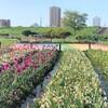 綺麗なお花と元気な鯉のぼり!荒川河川敷「虹の広場」へ【北千住】