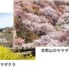 ソメイヨシノ以外にも,たくさんの種類の桜があります.万葉集で詠まれたのはヤマザクラ.ソメイヨシノの華やかさはありませんが,品位が高く,風情もあります. 桜(2)/ 万葉集 あしひきの,やまさくらばな,ひならべて,かくさきたらば,いとこひめやも 山部赤人.