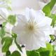 【 Happy Flower Friday ‼︎ 】vol.20