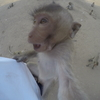 【旅】猿の惑星、ロッブリーへ!!