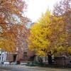 秋色のエンタシス