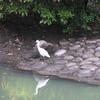 街中の動物・野鳥