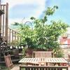 今年も「さくらんぼ」できた。「熱海温泉ハウス」5階のガーデンスペース。桜花見のあと。