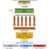 包括的なメタゲノム解析パイプライン MAGO