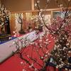 第15回大和郡山・盆梅展(3月11日まで)