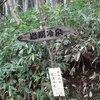 丸瀬布町 970m峰(点名・雨降山 )