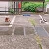 仲良く毛繕いする2匹の野良猫⭐︎