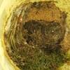 ~経過報告!ゴミバケツで残渣堆肥の作り方~小さな庭の家庭菜園~