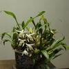 小春日和り・・・植物の赤ちゃん達
