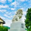 土佐二宮、樹齢800年の牡丹杉『高知・小村神社』