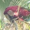 パラグアイにいる野鳥を紹介します!【バードウォッチング】