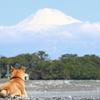 真っ白になった富士山