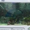 沖縄美ら水族館の魚たち 東京にやってきました^^