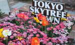 カメラ持って春探し♪ in 東京スカイツリータウン♥