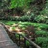 道保川を歩く 崖線の湧水をあつめて流れる小さな川