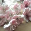 桜の季節 ~新学期への期待と不安を薄桃色の花びらで応援したい~
