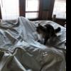 パパ君飯:ベッドメイキングの謎