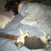 猫を夜間、部屋の中で放し飼いにしてみました