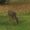 我が家の果樹は鹿との戦いです