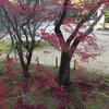 紅葉の光明寺