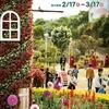 沖縄こどもの国 花まつり2018