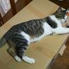 猫用段ボールハウスを改良してみた