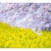 春から始める紫外線対策