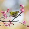 2019年3月10日などの鳥撮り(1/2)-都内の都市公園