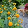5月下旬の庭の花