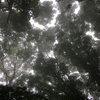 2019年6月22日 水ヶ塚公園~須山登山道~幕岩~双子山ハイクレポート@富士山