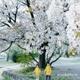 2020年春の桜と子どもたちの成長と♡