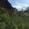 玉川学園ピースハウス:素敵なお庭再生プロジェクト