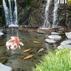 箱根湯本温泉・天成園の玉簾の瀧にて【ポケモンGOAR写真】滝とポケモン