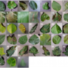 Using Deep Learning for Image-Based Plant Disease Detectionまとめた