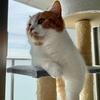 【愛猫家のレビュー】愛猫家視点で「BEASTERS」のレビュー。