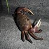 西表島旅行記Part7 ~竜頭蛇尾~