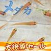 (決算セール)(日淡)ヒメダカ(約2cm)(50匹)【水槽/熱帯魚/観賞魚/飼育】【生体】【通販/販売】【アクアリウム】