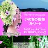 【 告知】3月31日~4月1日macoさん いのちの祝祭リトリート in富士河口湖