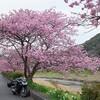 桜ツーリング写真展2017
