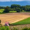 投資は今は畑を耕す時期??来年の春ごろに花びら満開。資産爆増??