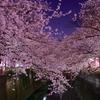 【日記】2017年4月13日(木)「二ヶ領用水の夜桜」