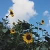 夏の終わりにもうひと花!