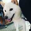愛犬を愛Phoneで撮る!