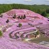 春がまた来る?GWから一面がピンクに染まる絶景が始まる!北海道大空町で「芝桜まつり」開催!