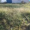 これから畑にしないといけないところに広がる草むら…。三角ホー片手に開拓してるけど、心折れそうです。